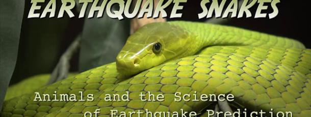 """1. Platz für """"Earthquakes Snakes""""!"""
